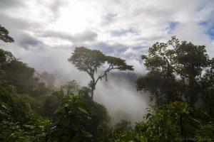 Aiko Dschungel